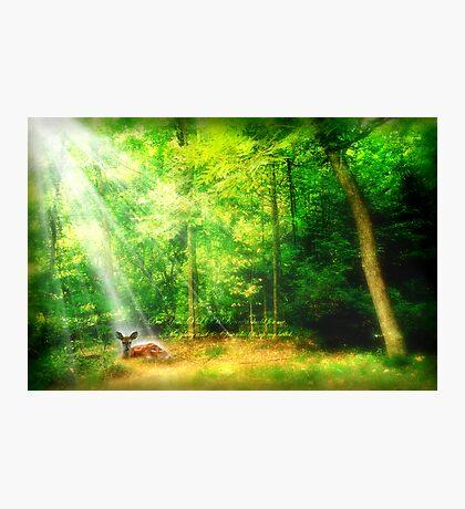 My Glory Photographic Print