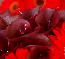 Bride's Bouquet by Tammy Hale