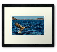 The White Tailed Eagle Framed Print