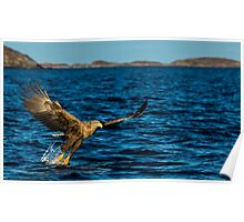 The White Tailed Eagle Poster