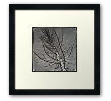 Still Life - winter tree Framed Print