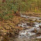 DeSoto Falls – scenic hikes along Frogtown Creek by Bernd F. Laeschke