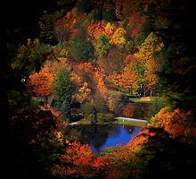 Fall Majesty Upgrade by Lisa Taylor