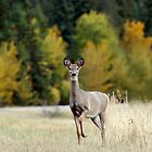 Saskatchewan Doe - Deer by Lynda   McDonald