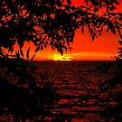 RED DAWN...... A Tribute to YELLOW JACKET..... by Larry Llewellyn