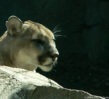 Cougar by KCGraphics