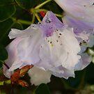 Flower by SirDidymus