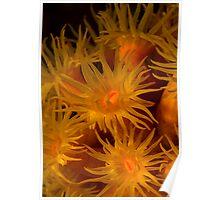 Coral polyps Poster