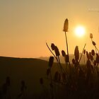 """ Thistles At Sunset "" by Richard Couchman"