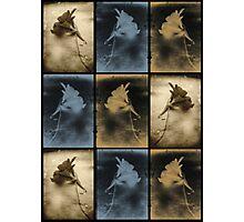 Nasturtium Composite. Photographic Print
