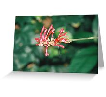 in the Glasshouse   Greeting Card