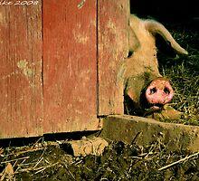 #582 Peek-A-Boo Piggy by MyInnereyeMike