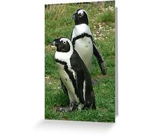 #586  Two Penguins Greeting Card
