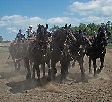 Black Percheron Eight Horse Hitch by Al Bourassa