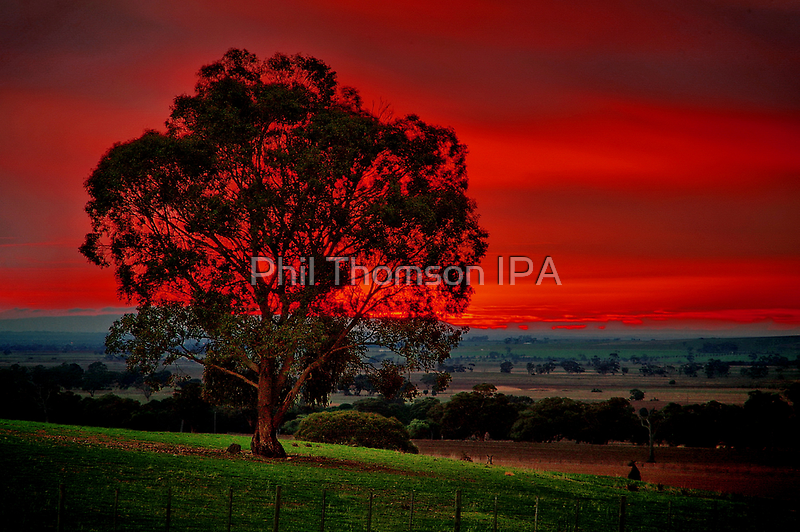 """""""The Warning"""" by Phil Thomson IPA"""