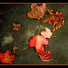 Falling Leaves by Mary Campbell