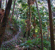 Rainforest  by Evita