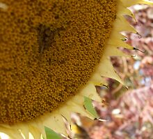Sunflower in an autumnal setting by AbsintheFairy