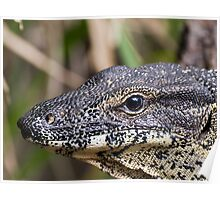 Lace Monitor (close up) Poster