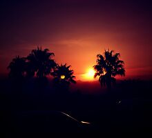 Sunset with Palm Trees by Crashdummy