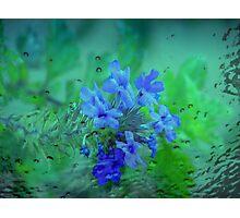 Ice Flowers Photographic Print
