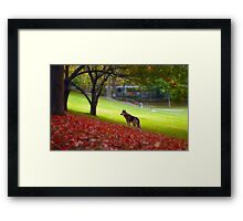 Just another fall day Framed Print