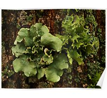 Lichens and Moss Poster