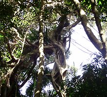 She's a superfreak ~ Strangler Fig by sweetscent62