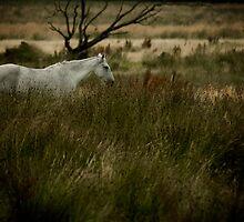 Horse by Brian Canavan