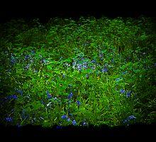 Bluebells by Brian Canavan