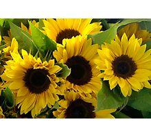 Sun Flowers at the Public Market, Seattle Photographic Print