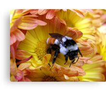Color Coordinated Bumble Canvas Print