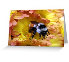 Color Coordinated Bumble Greeting Card