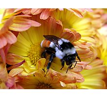 Color Coordinated Bumble Photographic Print
