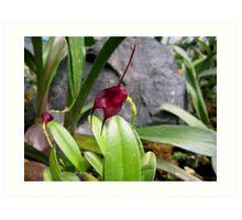 Teeny Burgundy Orchid Art Print