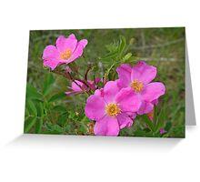 Prairie Rose Greeting Card