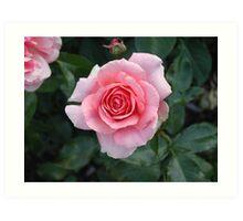 May Rose Art Print