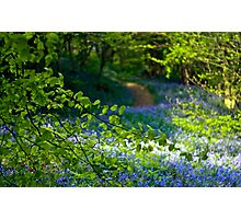 Carpet of blue Photographic Print