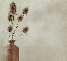 Stone jar of teasles by Jacqueline Moore