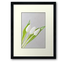 Tulips times 3 Framed Print