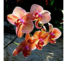 Orchids from Tennesse...  Photographic Print