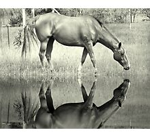 Afternoon Drink Photographic Print