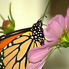Butterfly and Flower by sherryk