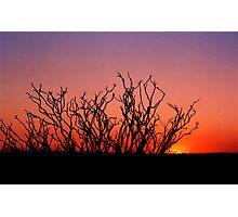 OCOTILLO BLOOD SUNSET Photographic Print
