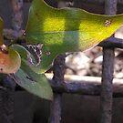 Vine leaves against grate in sunlight II by Nadia Korths