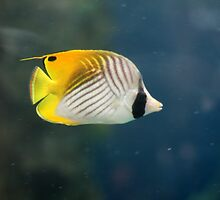 Colour Fish. by AstroGuy