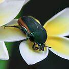Fig Eater Beetle On the Plumeria by heatherfriedman