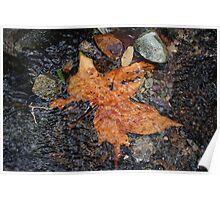 Leaf In The Stream Poster