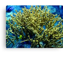Coral II Canvas Print