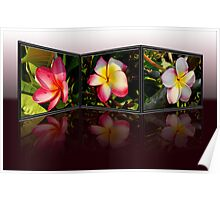 Plumeria reflected Poster